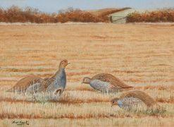 English Partridges | Sir David Scott Murray | Oil Painting