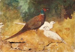 Pheasants | Benjamin Haughton | Oil Painting