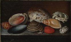 Still Life with Shells   UNKNOWN