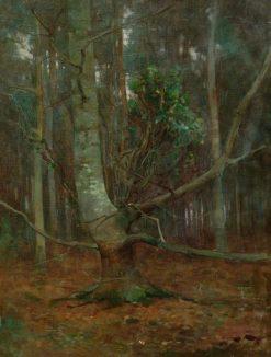 Study of a Beech | Benjamin Haughton | Oil Painting