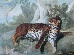 Study of a Leopard | Jean-Baptiste Oudry | Oil Painting