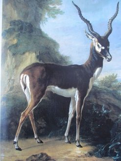 Antilope   Jean-Baptiste Oudry   Oil Painting