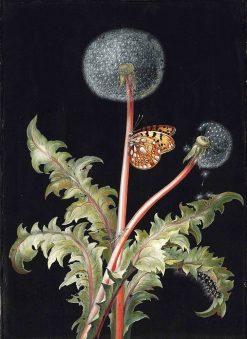 Dandelion | Barbara Regina Dietzsch | Oil Painting