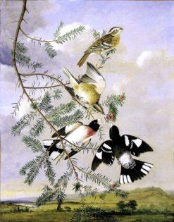 Rose-Breasted Grosbeak | John James Audubon | Oil Painting