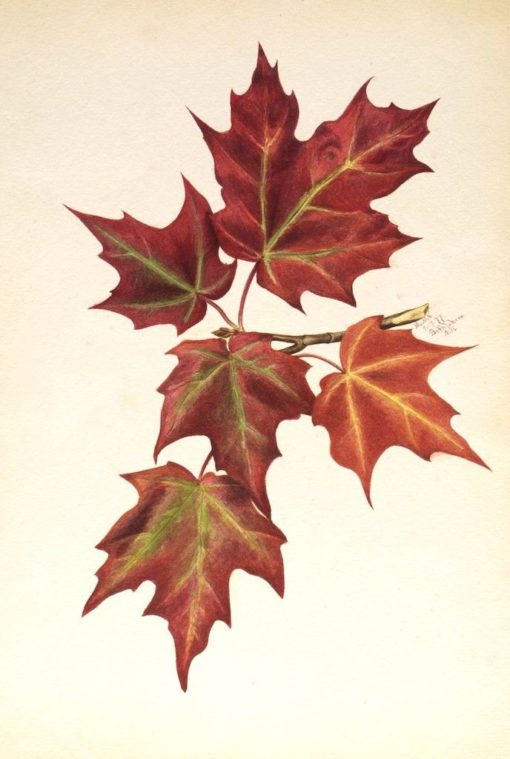 Autumn Leaves | Mary Vaux Walcott | Oil Painting