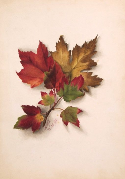Autumn Leaves | Mary Vaux Walcott | Oil Painting