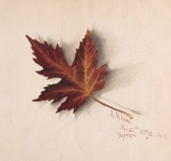 Autumn Leaf | Mary Vaux Walcott | Oil Painting