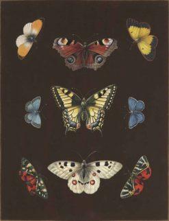 Butterflies | Barbara Regina Dietzsch | Oil Painting