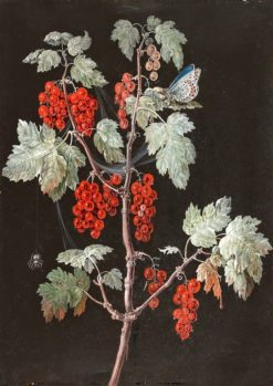 Red Currants | Barbara Regina Dietzsch | Oil Painting