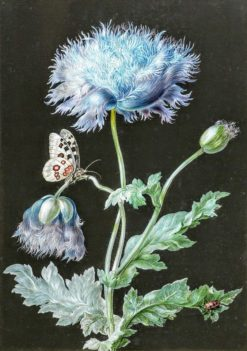 A blue poppy with a red beetle and white moth against a black background | Barbara Regina Dietzsch | Oil Painting