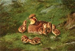 Hen Quail and Chickens | Arthur Fitzwilliam Tait | Oil Painting