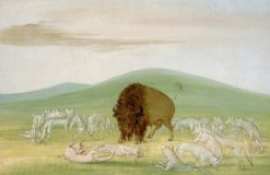 Wounded Buffalo Bull Surrounded by White Wolves | George Catlin | Oil Painting