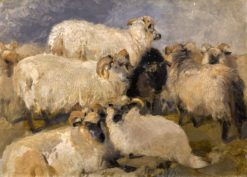 Study of Highland Blackface Sheep | Sir Edwin Landseer | Oil Painting