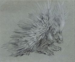 Porcupine | Jean-Baptiste Oudry | Oil Painting